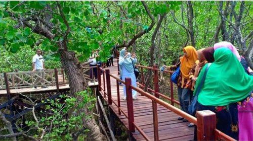 Mangrove Rewataa, Spot Wisata Baru di Sulbar