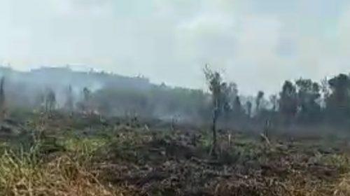 Berhektare-hektare Karhutla di Sulbar