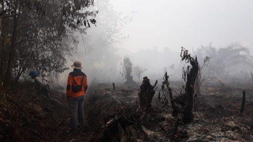 Kebakaran di Tommo Hanguskan 25 Hektare Lahan dan Hutan
