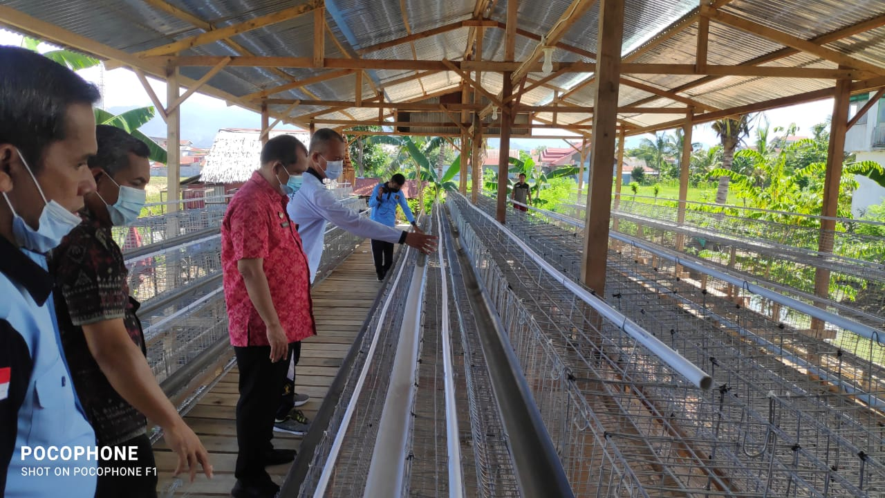 Rintis Peternakan Ayam Petelur Secara Modern